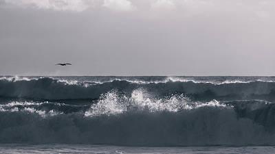 Photograph - Pelican Patrol Delray Beach Florida by Lawrence S Richardson Jr