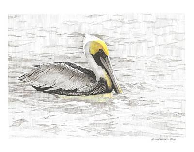 Wall Art - Drawing - Pelican by Paul Shafranski
