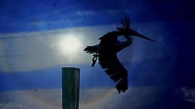 Pelican  Art Print by Paul Wilford