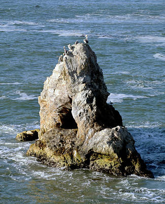 Photograph - Pelican Peak Pismo Beach by Barbara Snyder