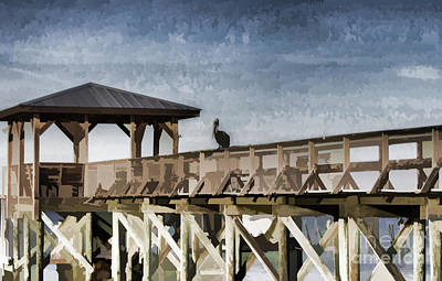 Photograph - Pelican Perch by Roberta Byram