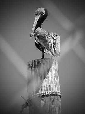 Pelican Perched Art Print by Megan Verzoni