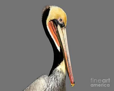 Photograph - Pelican Posing by Susan Wiedmann