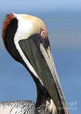 Photograph - Pelican Profile 2 by Carol Groenen