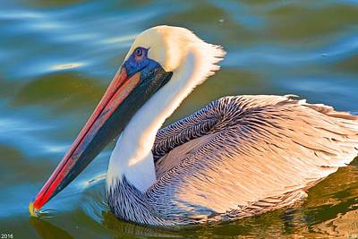 Photograph - Pelican Profile 2 by Lisa Wooten