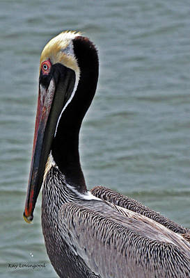 Photograph - Pelican Profile by Kay Lovingood