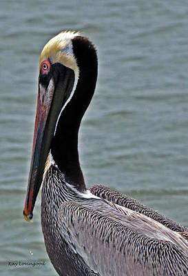 Photograph - Pelican Profile by Kay Lovingood