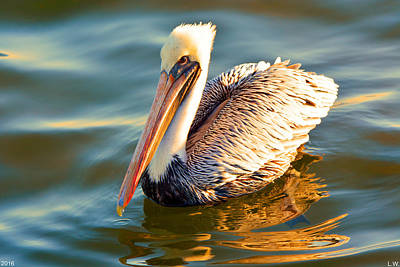 Photograph - Pelican Profile  by Lisa Wooten