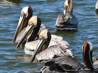 Photograph - Pelican Profiles by Dan Williams