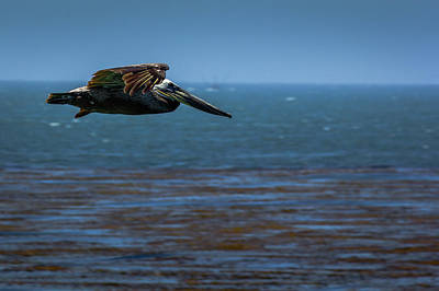 Photograph - Pelican  by Randy Bayne