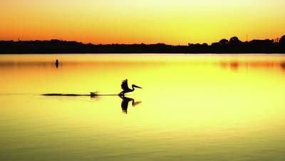Photograph - Pelican Re Make by Grant Petras
