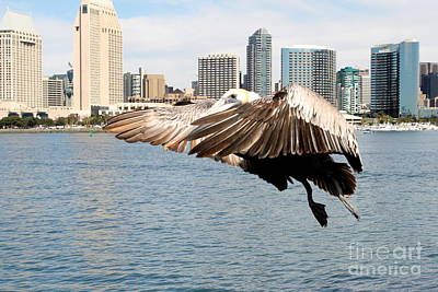Photograph - Pelican Ready To Land by Henrik Lehnerer
