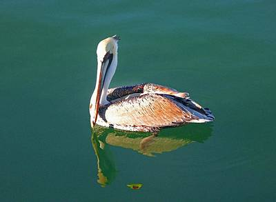 Painting - Pelican Reflection by Michael Thomas