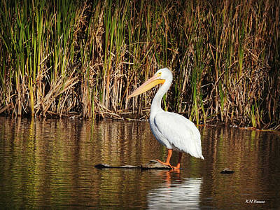 Photograph - Pelican Relaxes On A Log by Kathy M Krause