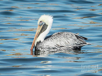 Pelican Relaxing Art Print
