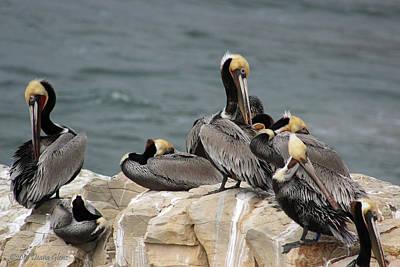 Photograph - Pelican Rock by Deana Glenz