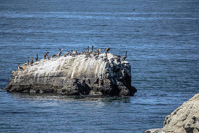 Photograph - Pelican Rock by Randy Bayne