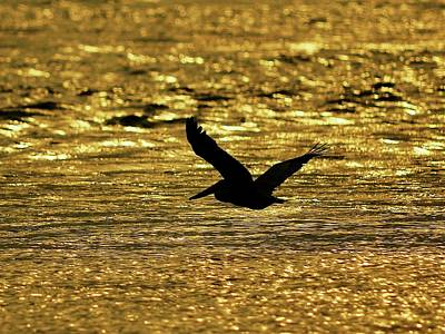 Pelican Silhouette - Golden Gulf Art Print by Al Powell Photography USA