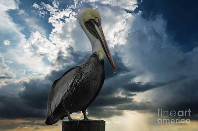 Photograph - Pelican Sky by Dale Powell