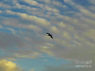 Photograph - Pelican Soaring At Sunset by D Hackett