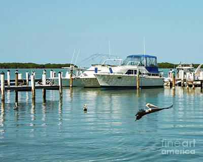 Photograph - Pelican Soars At Marina In Florida Keys by Susan Vineyard