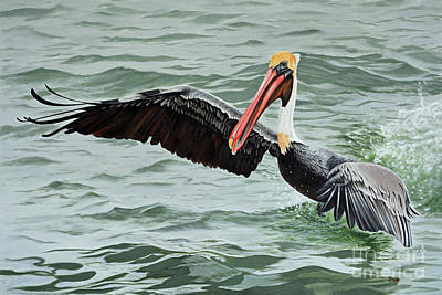 Painting - Pelican Splash by Jimmie Bartlett