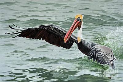 Painting - Pelican Splash by Jimmie Bartlett