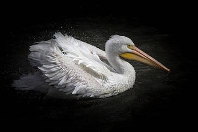 Photograph - Pelican Splash by Teresa Wilson