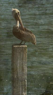 Photograph - Pelican by Steve Gravano