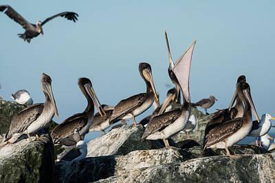 Photograph - Pelican Suite by Robert Potts
