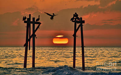 Photograph - Pelican Sunrise by DJA Images