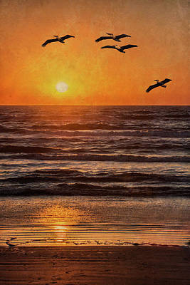 Photograph - Pelican Sunrise by Patti Deters