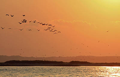 Photograph - Pelican Sunset by Captain Debbie Ritter