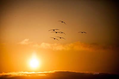 Superhero Ice Pops - Pelican Sunset by Linda Romine