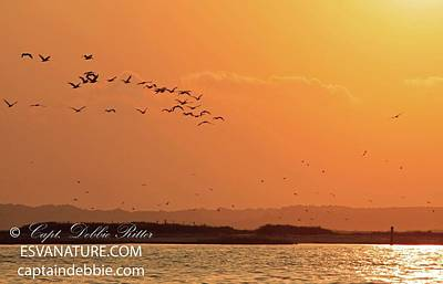 Photograph - Pelican Sunset Over Barrier Island by Captain Debbie Ritter
