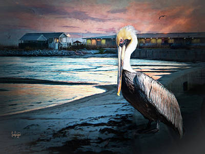 Photograph - Pelican Sunset by Sandra Schiffner