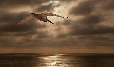 Photograph - Pelican Sunset by Windy Osborn