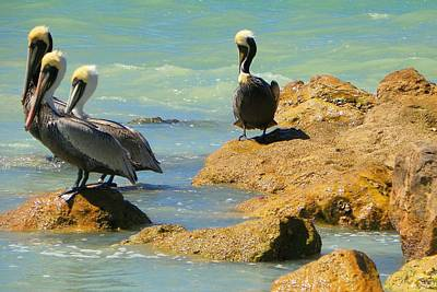 Photograph - Pelican Surf by Sheri McLeroy
