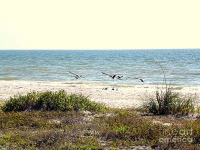 Photograph - Pelican Take-off by Terri Mills