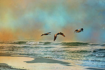 Photograph - Pelican Trio by Jai Johnson