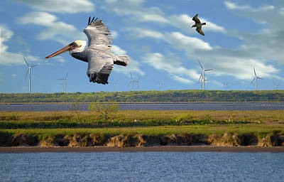 Photograph - Pelican Turbine Chase by Doug LaRue