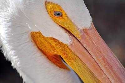 Pelican Twist Art Print by Marty Koch