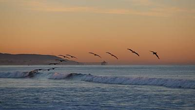 Photograph - Pelican Wave - 4 by Christy Pooschke