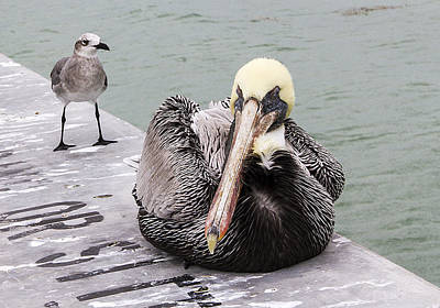 Photograph - Pelican With Friend by Bob Slitzan