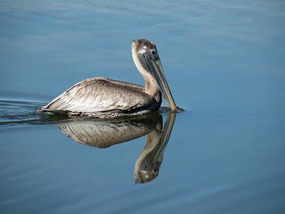 Pelican With Reflection Art Print by Rosalie Scanlon