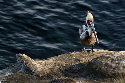 Photograph - Pelican1 by James David Phenicie