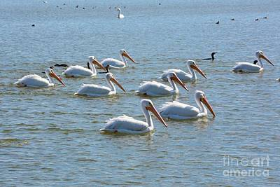 Photograph - Pelicans And Co by Carol Groenen
