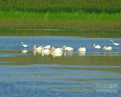 Photograph - Pelicans And Egrets Together by Kathy M Krause