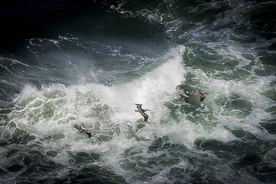 Photograph - Pelicans And Surf by Robert Potts