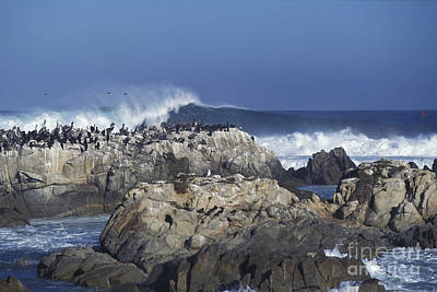 Photograph - Pelicans And Surf by Stan and Anne Foster